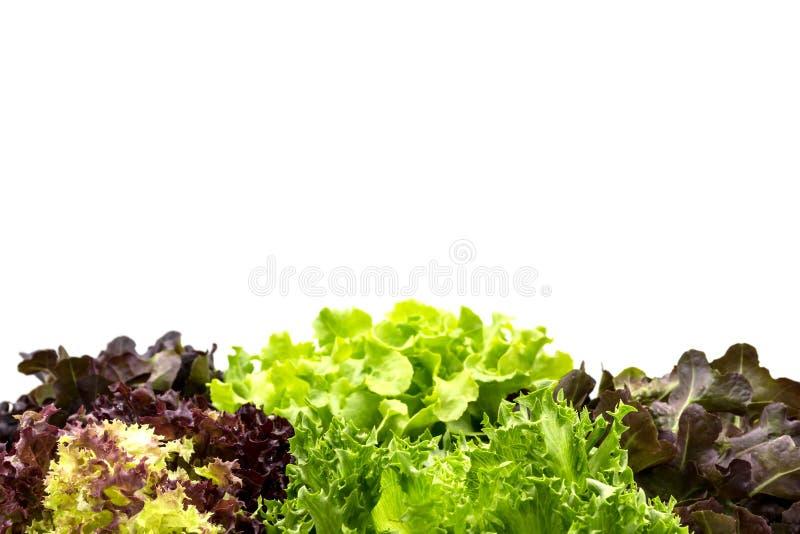 Foglie dell'insalata con copyspace fotografia stock libera da diritti