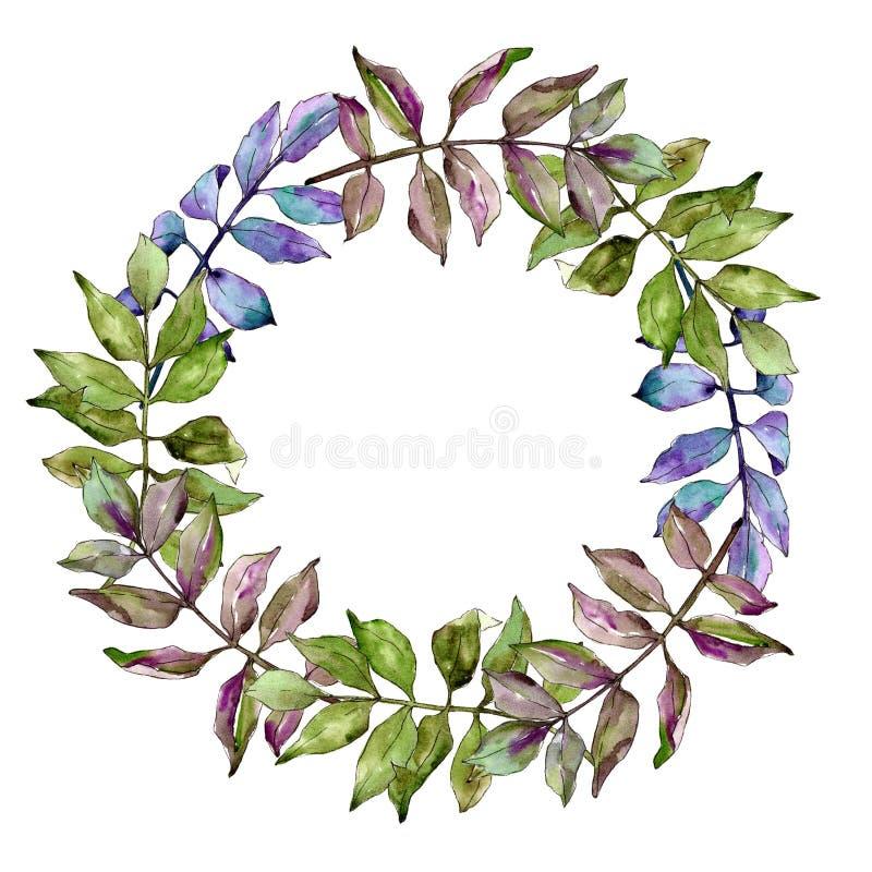 Foglie della cenere verde Fogliame floreale del giardino botanico della pianta della foglia Quadrato dell'ornamento del confine d illustrazione vettoriale