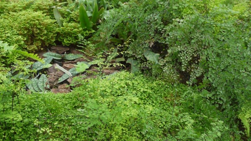 foglie della felce alla foresta pluviale fotografie stock libere da diritti