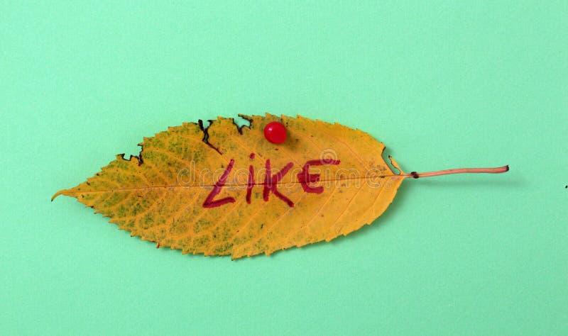 Foglie della noce di autunno con testo scritto a mano fotografie stock libere da diritti