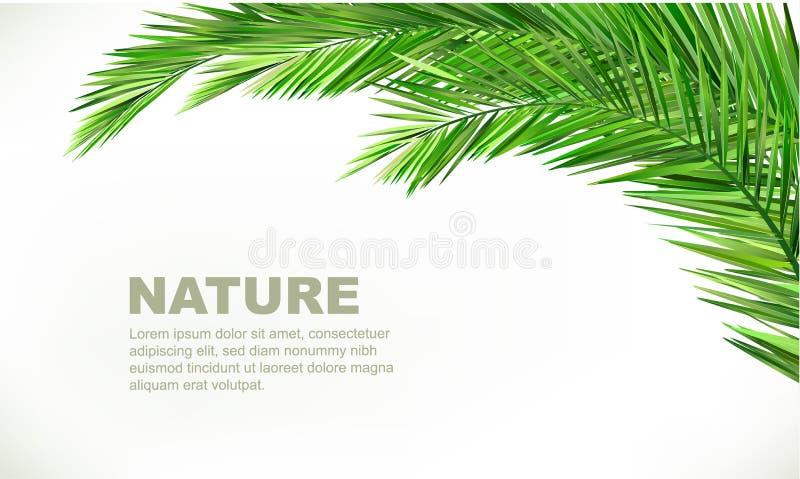 Foglie della noce di cocco royalty illustrazione gratis