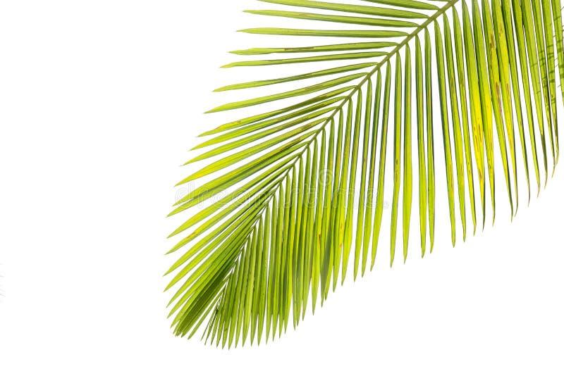 Foglie della palma dal sole fotografia stock