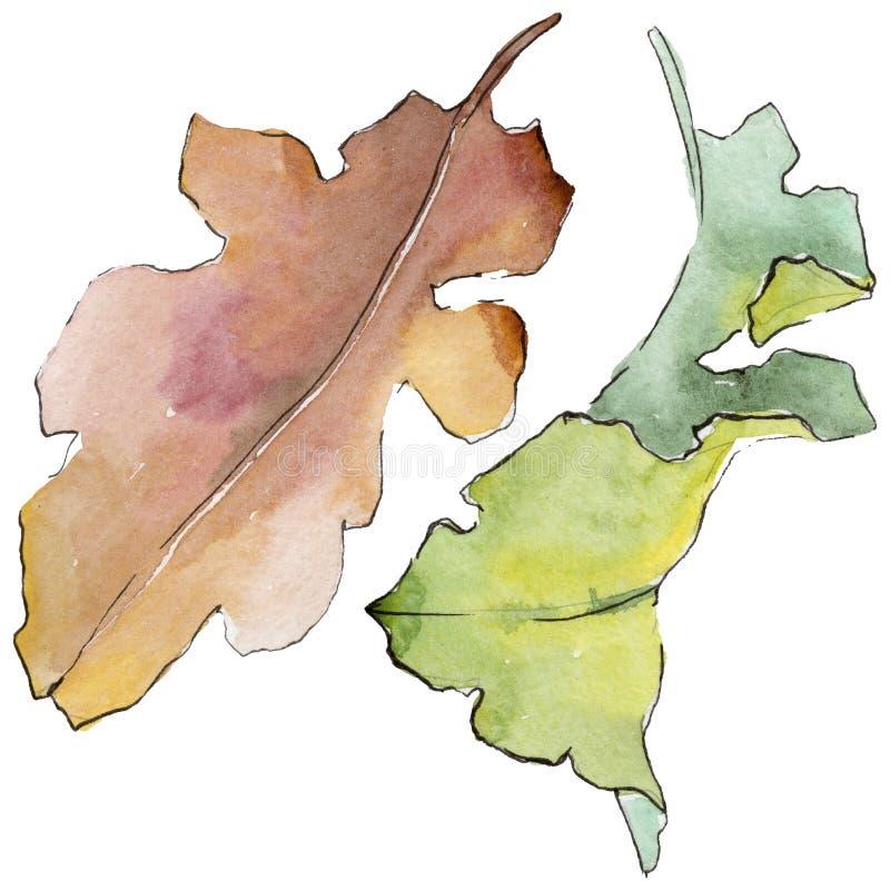Foglie della quercia in uno stile dell'acquerello isolate illustrazione di stock