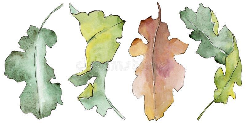 Foglie della quercia in uno stile dell'acquerello isolate illustrazione vettoriale