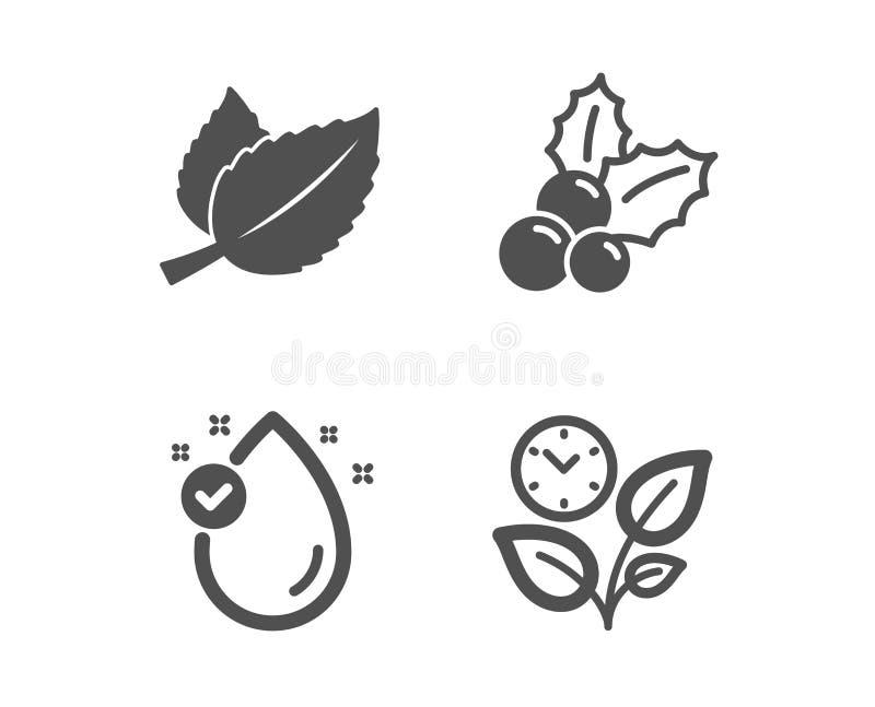 Foglie della vitamina e, di menta ed icone dell'agrifoglio di Natale Segno delle foglie Goccia dell'olio, menta di erbe, ilex aqu illustrazione di stock