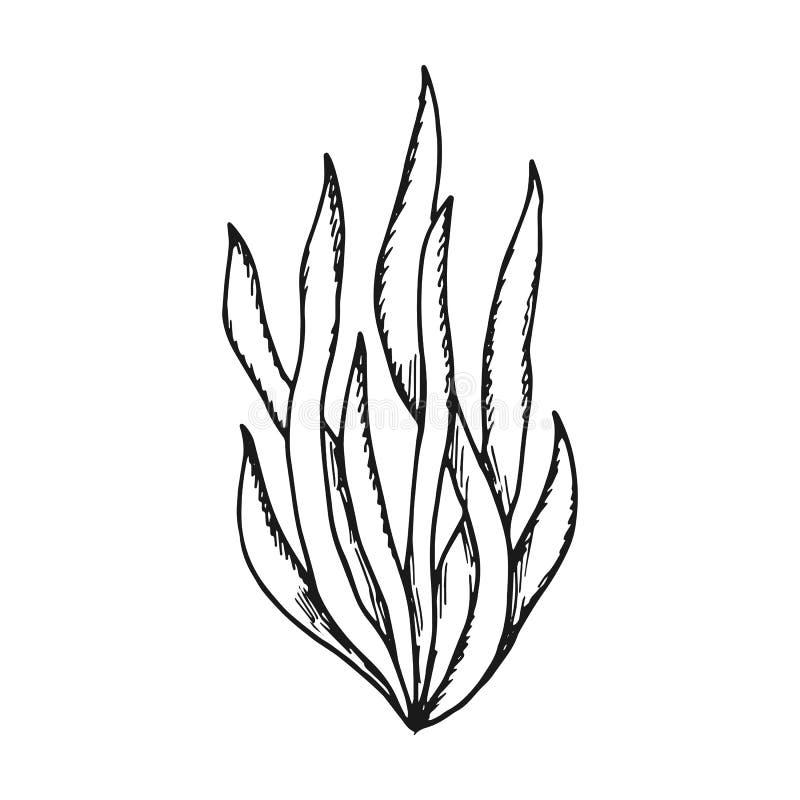 Foglie delle alghe vettore semplice di schizzo isolato nero illustrazione di stock
