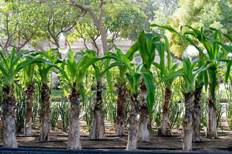 Foglie delle piante verdi immagine stock libera da diritti