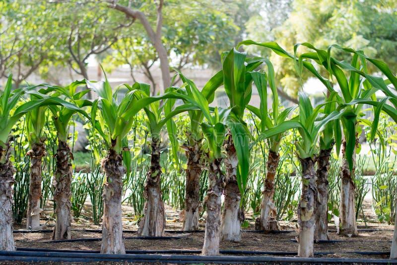 Foglie delle piante verdi fotografia stock