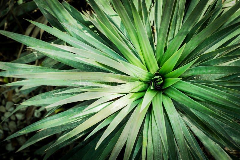 Foglie delle piante verdi immagini stock libere da diritti