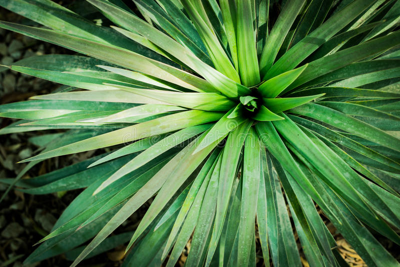 Foglie delle piante verdi fotografia stock libera da diritti