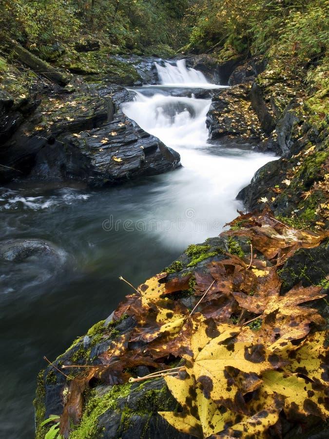 Foglie di acero di autunno accanto ad un flusso della montagna fotografia stock