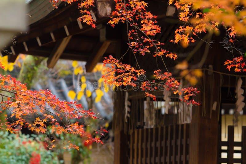 Foglie di acero rosse in tempio Kyoto Giappone immagine stock