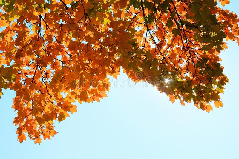 Foglie di acero variopinte in autunno immagini stock libere da diritti