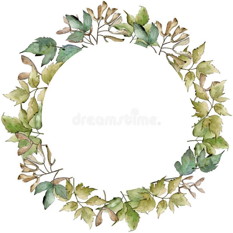 Foglie di acero verdi Fogliame floreale del giardino botanico della pianta della foglia Quadrato dell'ornamento del confine della royalty illustrazione gratis