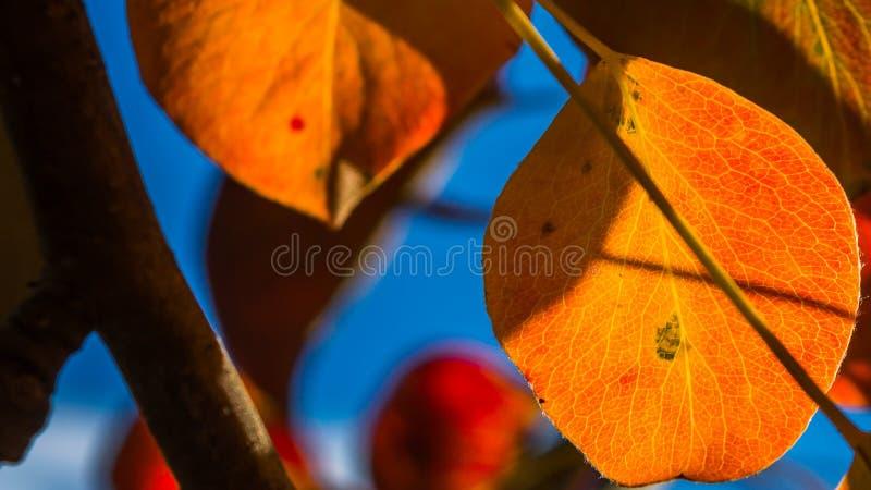 Foglie 2 di autunno fotografie stock libere da diritti