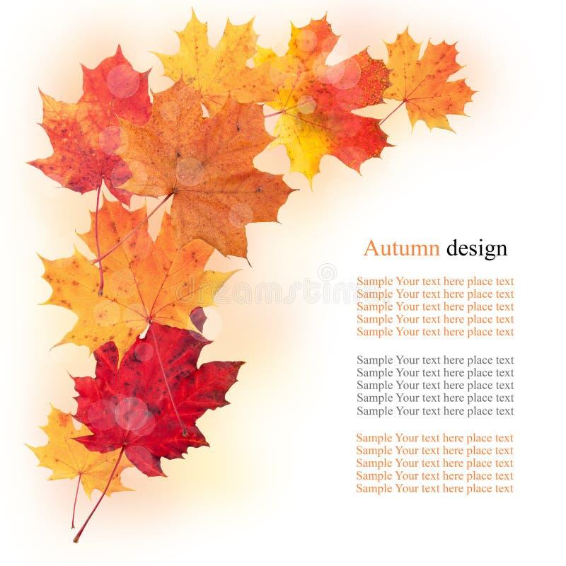Foglie di autunno illustrazione vettoriale