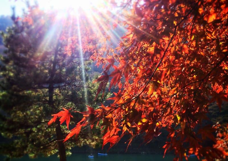 Foglie di autunno in Arashiyama, Kyoto, Giappone fotografie stock libere da diritti