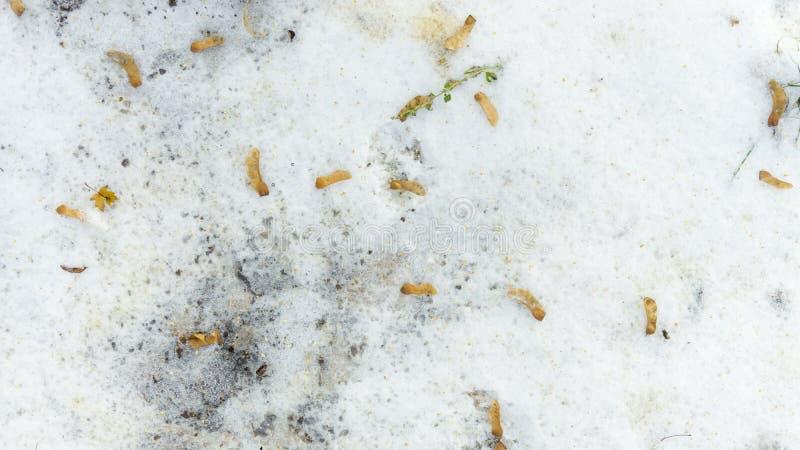 Foglie di autunno cadute nella neve Arrivederci autunno, ciao inverno fotografia stock