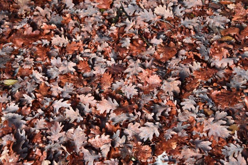 Foglie di autunno che cadono dall'albero backgrounds immagine stock
