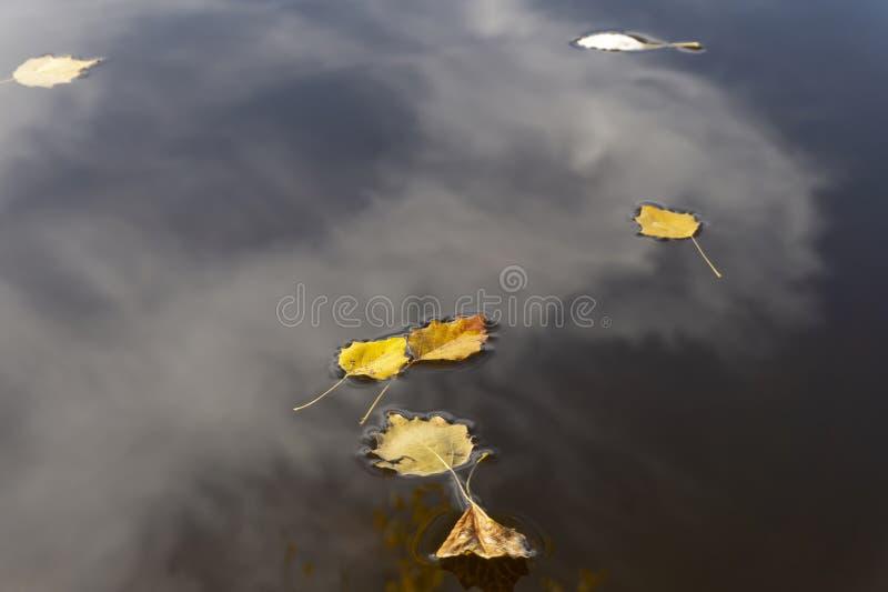 Foglie di autunno che galleggiano sull'acqua con le riflessioni fotografie stock libere da diritti