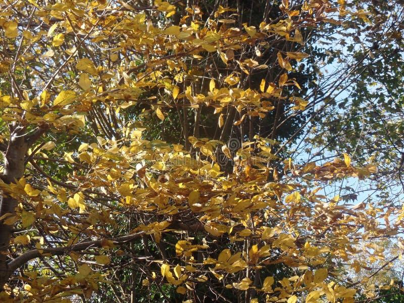 Foglie di autunno Colourful un giorno soleggiato immagine stock