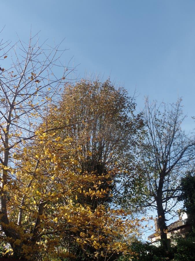 Foglie di autunno Colourful un giorno soleggiato immagine stock libera da diritti
