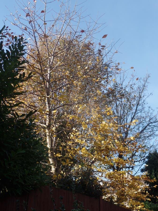 Foglie di autunno Colourful un giorno soleggiato fotografie stock