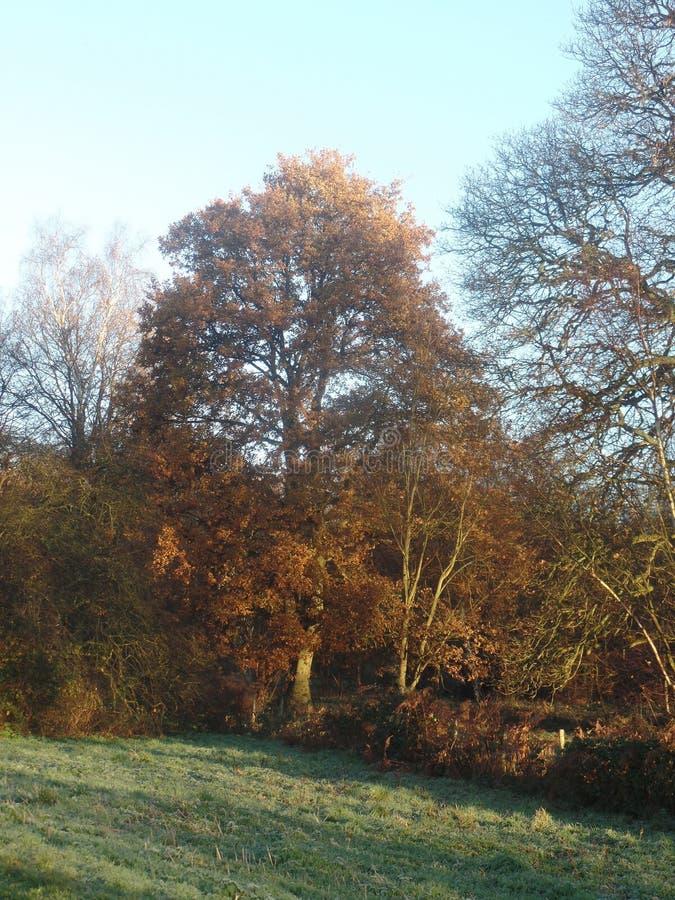 Foglie di autunno Colourful un giorno soleggiato fotografia stock