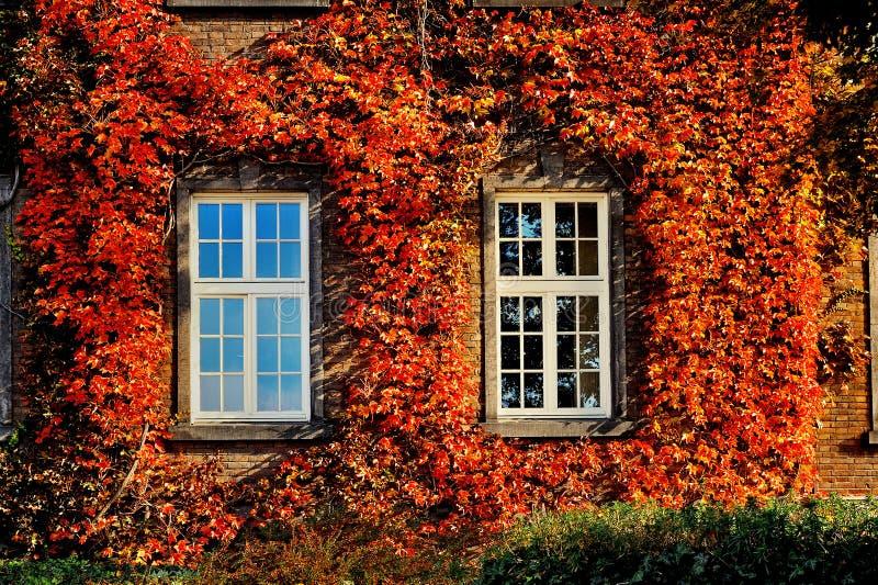 Foglie di autunno con due finestre bianche sulla vecchia for Finestre bianche