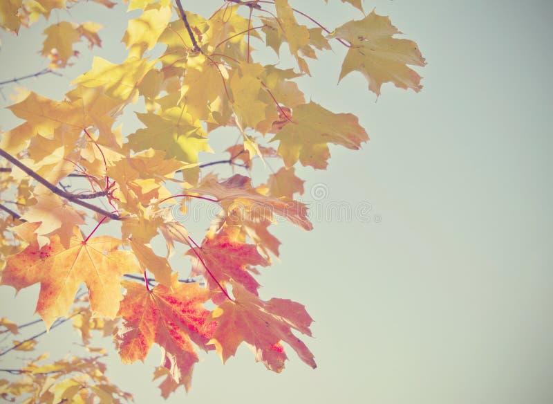 Foglie di autunno con il retro filtro fotografia stock