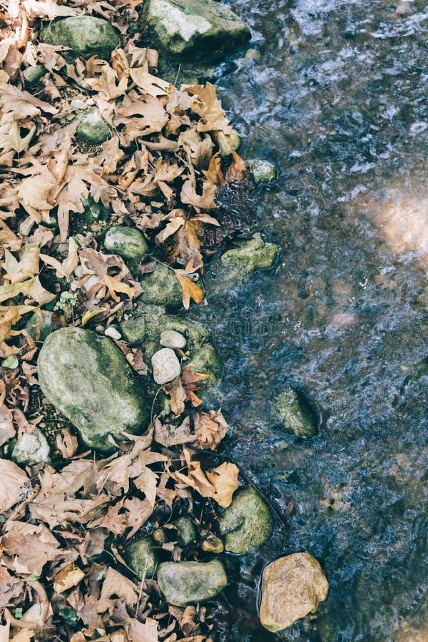 Foglie di autunno contro The Creek immagini stock libere da diritti