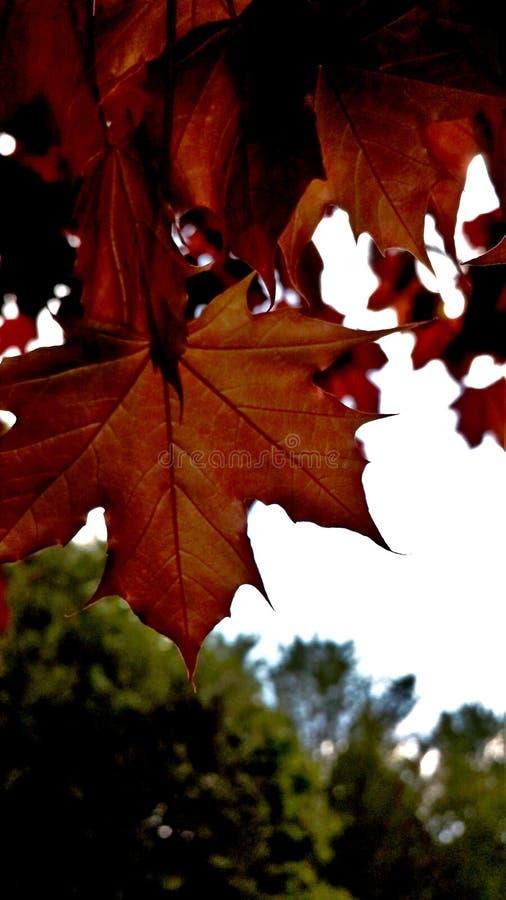 Foglie di autunno da sopra fotografia stock