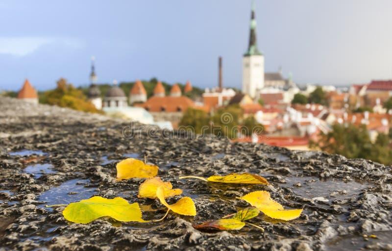 Foglie di autunno davanti alla vista alla città di Tallinn, Estonia fotografia stock libera da diritti