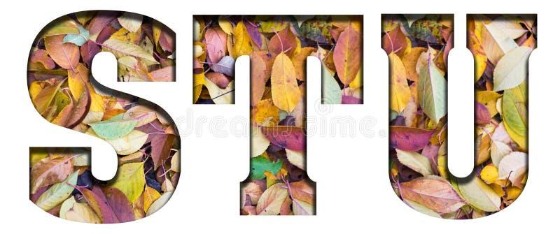 Foglie di autunno delle lettere di ABC, su un fondo bianco immagine stock libera da diritti