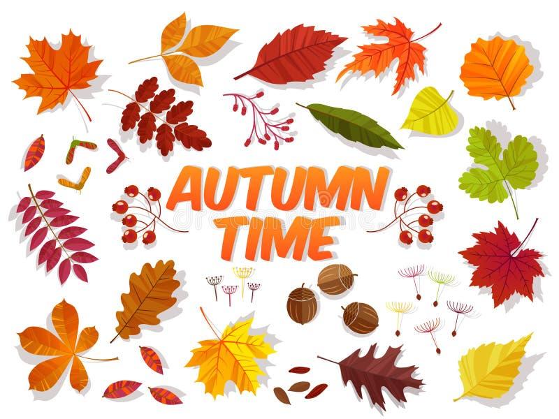 Foglie di autunno di colore su fondo bianco insieme della - Caduta fogli di colore stampabili ...