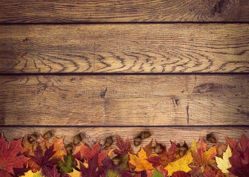 Foglie di autunno e ghiande su fondo di legno rustico immagini stock libere da diritti