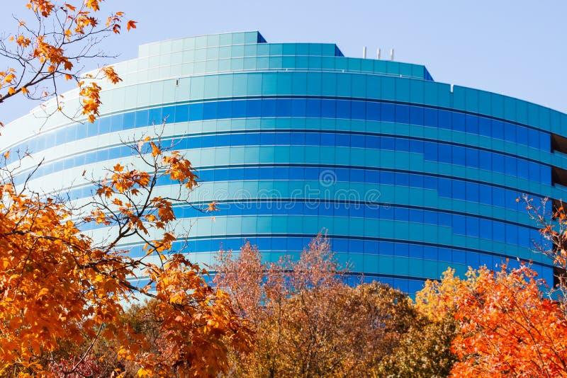 Foglie di autunno ed ufficio curvo blu fotografia stock