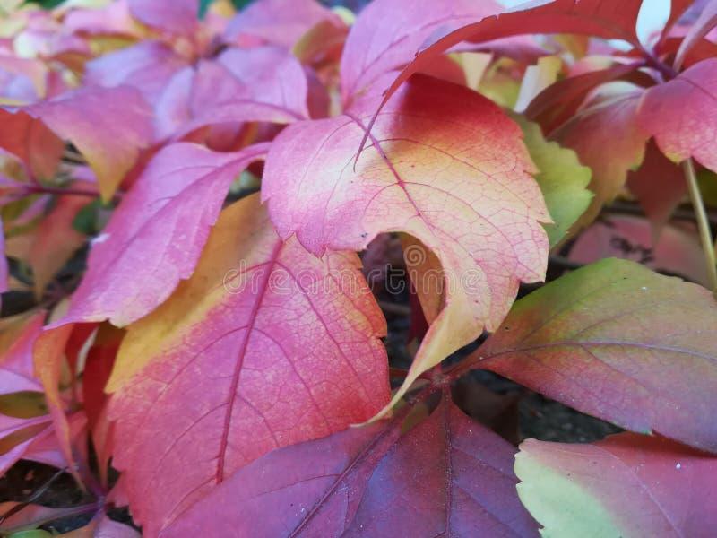 Foglie di autunno a fuoco fotografie stock