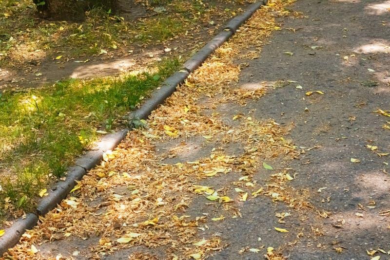 Foglie di autunno gialle sulla pavimentazione sul marciapiede fotografie stock libere da diritti