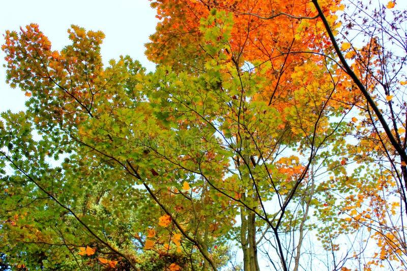 foglie di autunno in giardino botanico fotografia stock libera da diritti