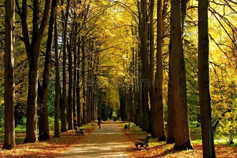 foglie di autunno in giardino botanico fotografie stock libere da diritti