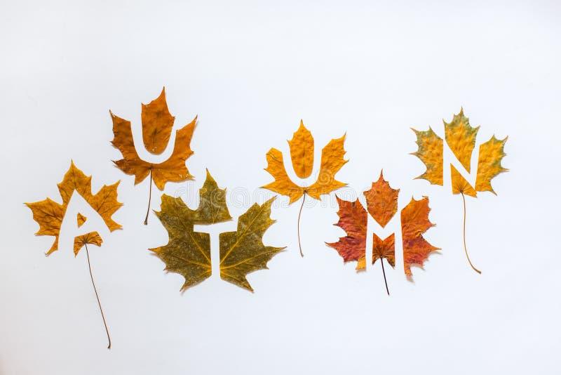 Foglie di autunno, lettere, scolpite foglie, trafori, concetto di autunno fotografie stock libere da diritti
