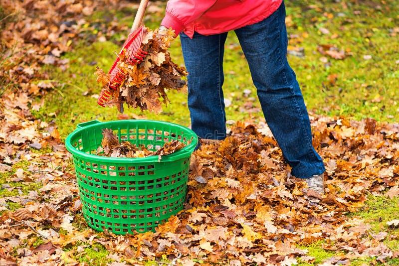 Foglie di autunno messe in un canestro verde immagine stock