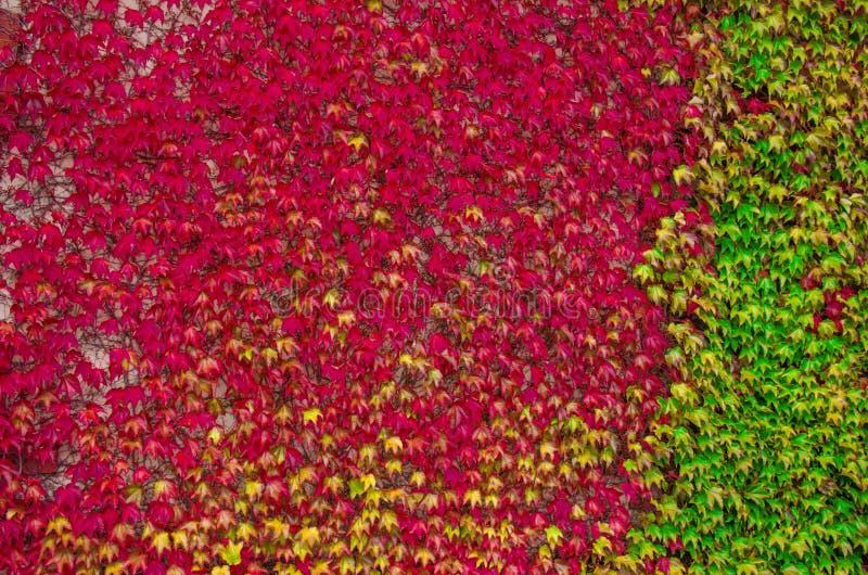 Foglie di autunno multicolori della cobite Tavolozza di autunno fotografia stock libera da diritti