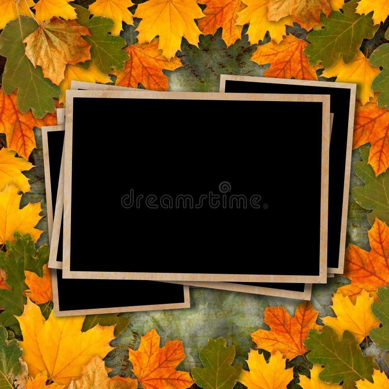 Foglie di autunno multicolori luminose su bello fondo astratto fotografia stock libera da diritti