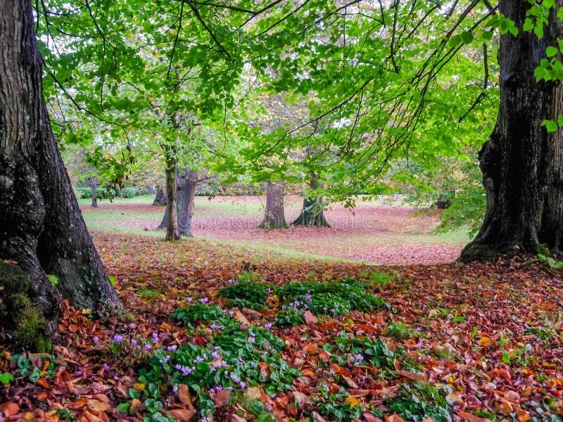 Foglie di autunno nel parco di Petworth, West Sussex fotografia stock libera da diritti