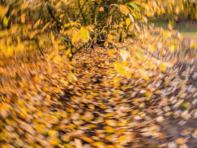 Foglie di autunno nella caduta gialla ed arancio e cadute in rotatin immagine stock libera da diritti