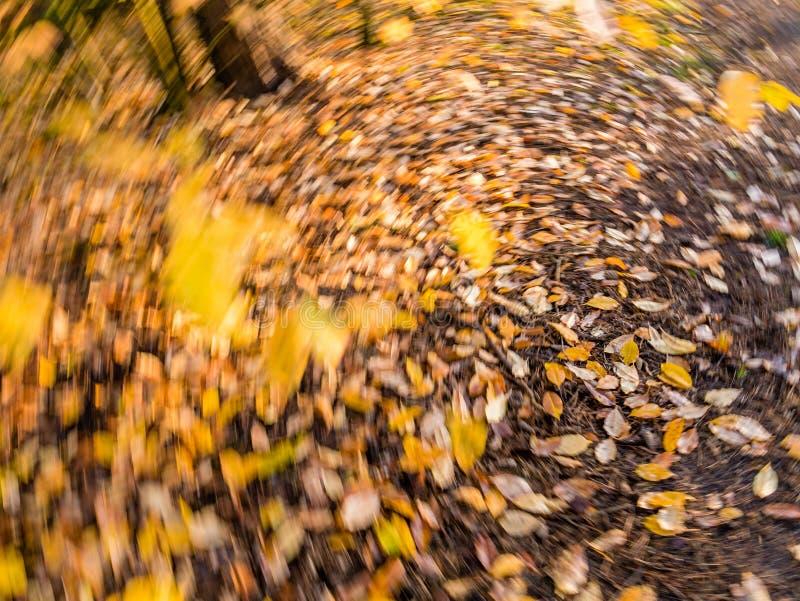 Foglie di autunno nella caduta gialla ed arancio e cadute in rotatin fotografia stock libera da diritti