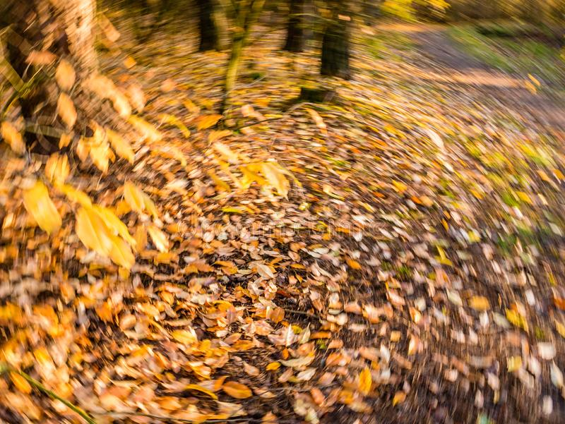 Foglie di autunno nella caduta gialla ed arancio e cadute in rotatin fotografia stock