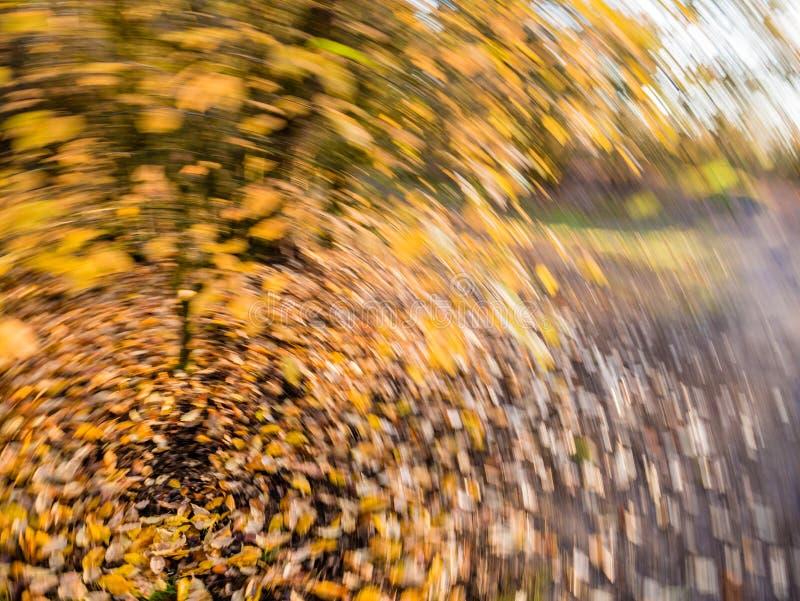 Foglie di autunno nella caduta gialla ed arancio e cadute in rotatin immagini stock